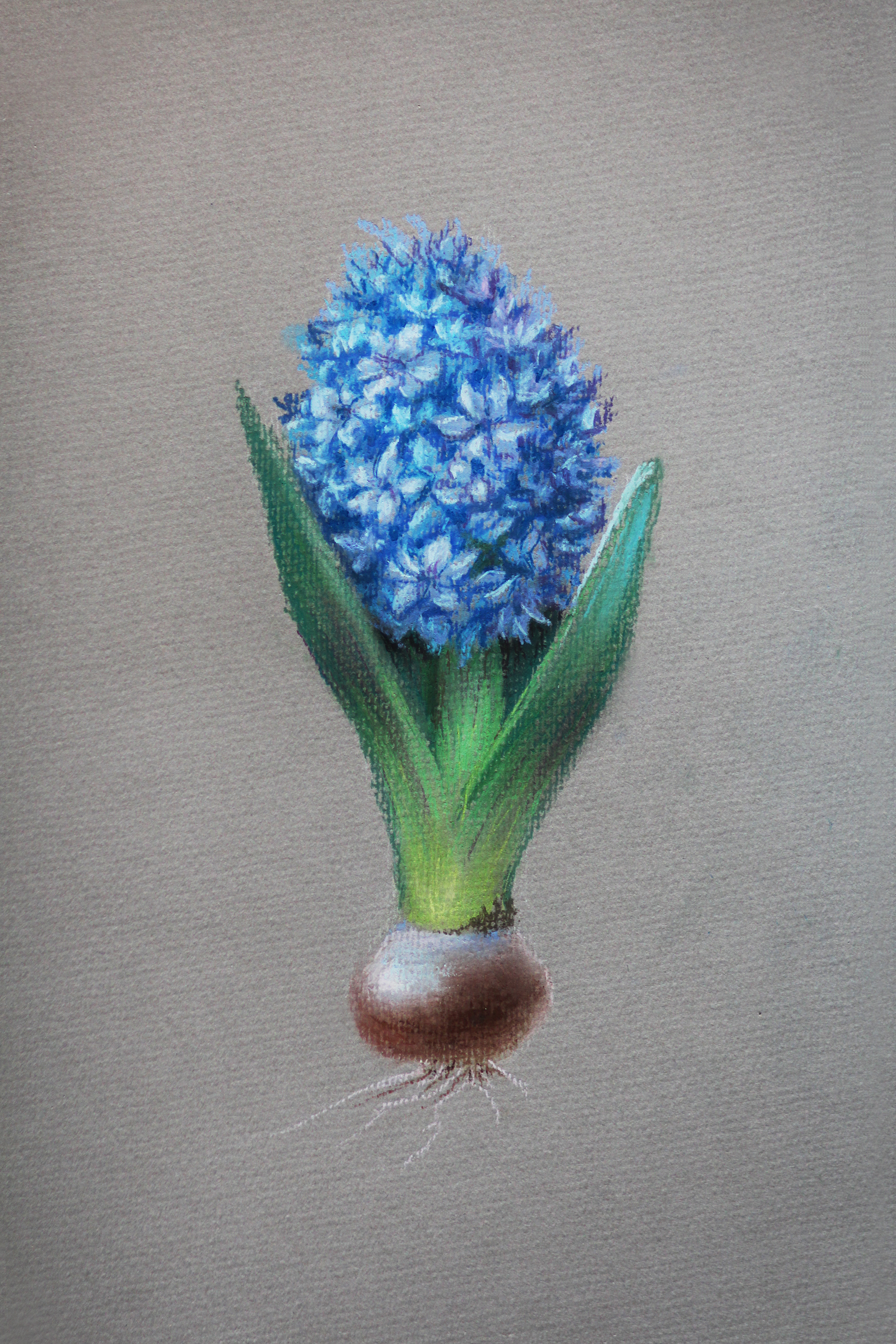 Flower hyacinth pastel art by artist Alice Croft Цветок Гиацинт Пастель